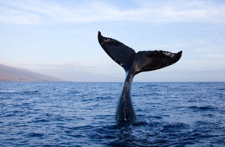 Hechos acerca de las ballenas