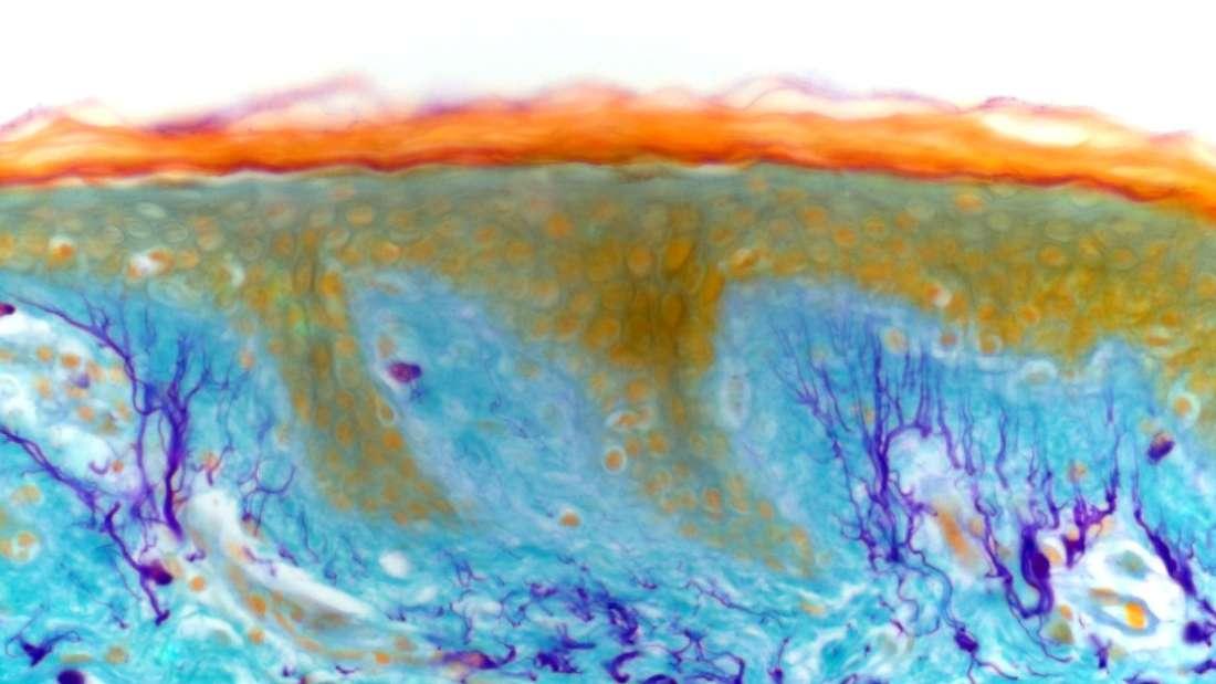 Los científicos acaban de descubrir un nuevo órgano humano, y podría tener enormes implicaciones sobre cómo tratamos el cáncer