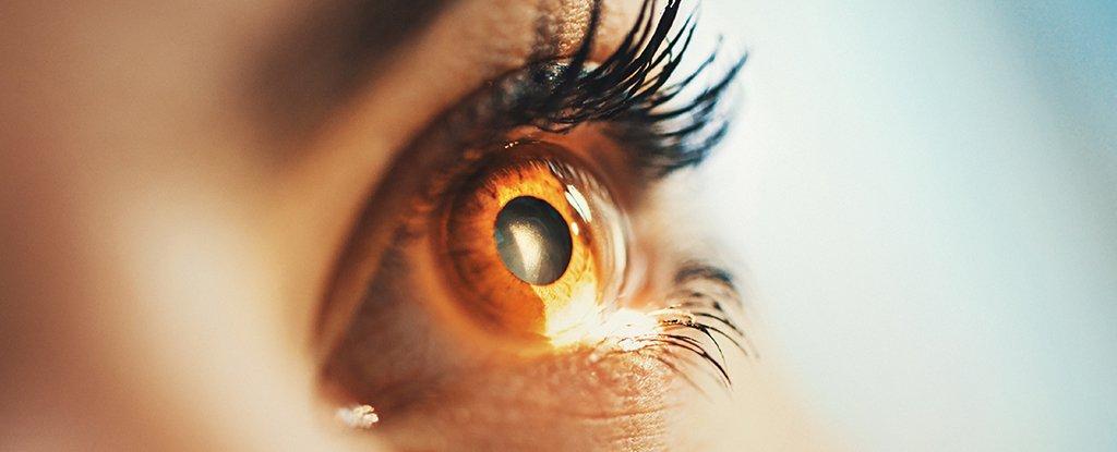 Por primera vez, médicos han restaurado la visión deteriorada de dos personas