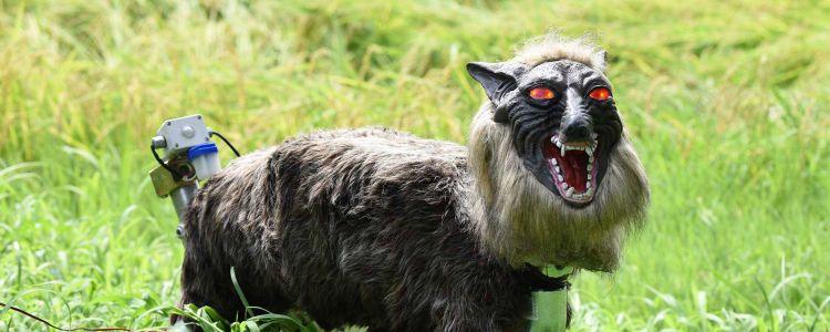 Este aterrador robot lobo está protegiendo los cultivos de los agricultores japoneses