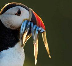 Casi 1 500 especies de aves se enfrentan a la extinción y nosotros tenemos la culpa