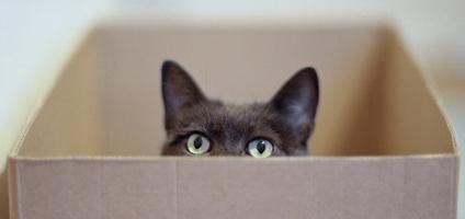 ¿Por qué a los gatos les encantan las cajas?