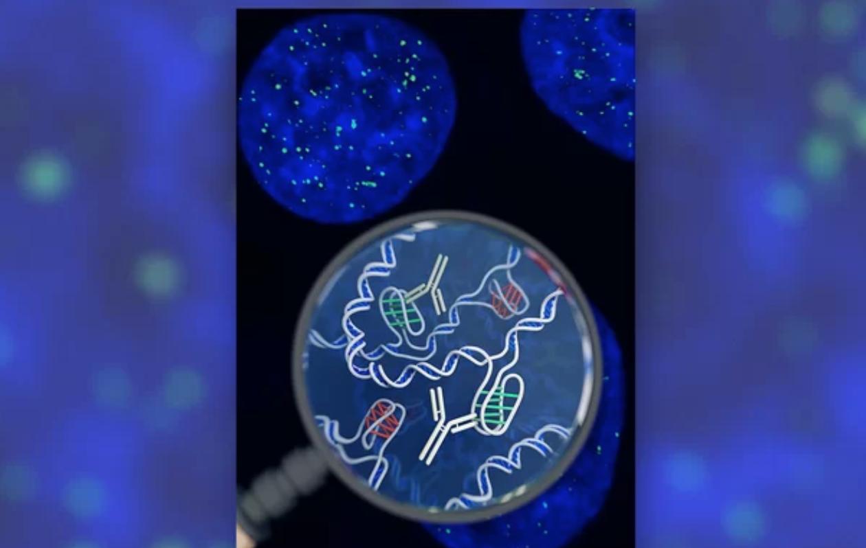 Una misteriosa nueva forma de ADN se acaba de descubrir en las células humanas