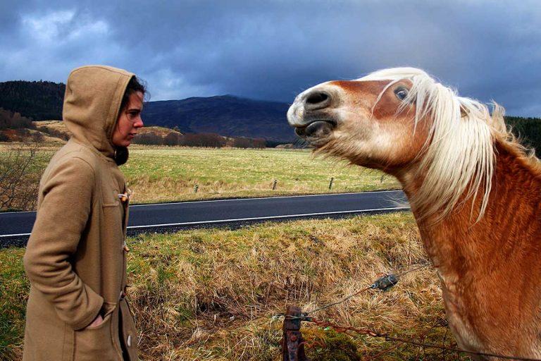 Los caballos recuerdan si sonreías o fruncías el ceño cuando te vieron por última vez