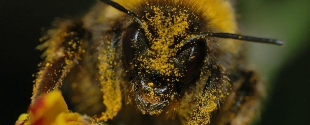 La Unión Europea acaba de tomar una decisión drástica para proteger a las abejas
