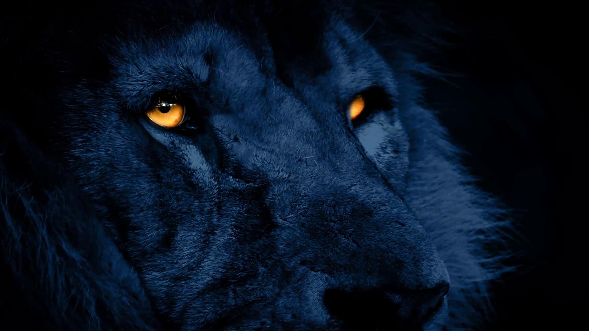 Algunos animales salvajes se están volviendo nocturnos para mantenerse alejados de los humanos