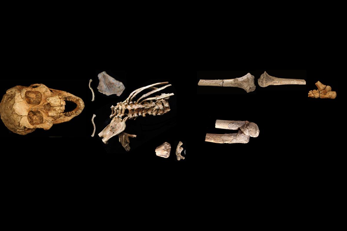 Una niña prehistórica de dos años podía agarrarse a las ramas de los árboles con los pies