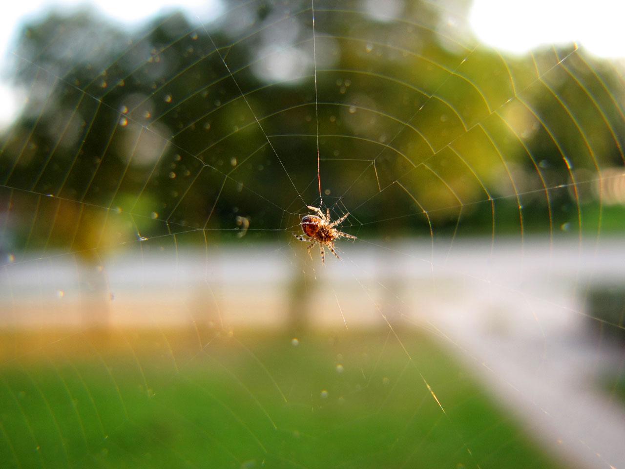 Las arañas pueden usar electricidad del aire para controlar su vuelo durante kilómetros