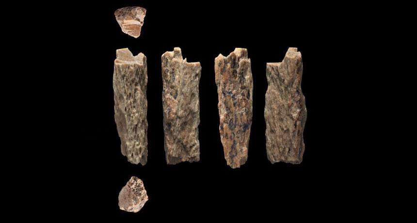 Niña prehistórica tenía padres que pertenecían a diferentes especies humanas