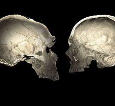Algunas personas tienen cabezas ligeramente aplastadas gracias a ADN neandertal