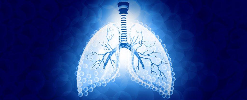 Científicos construyen un dispositivo «pulmonar» que convierte el agua en combustible limpio