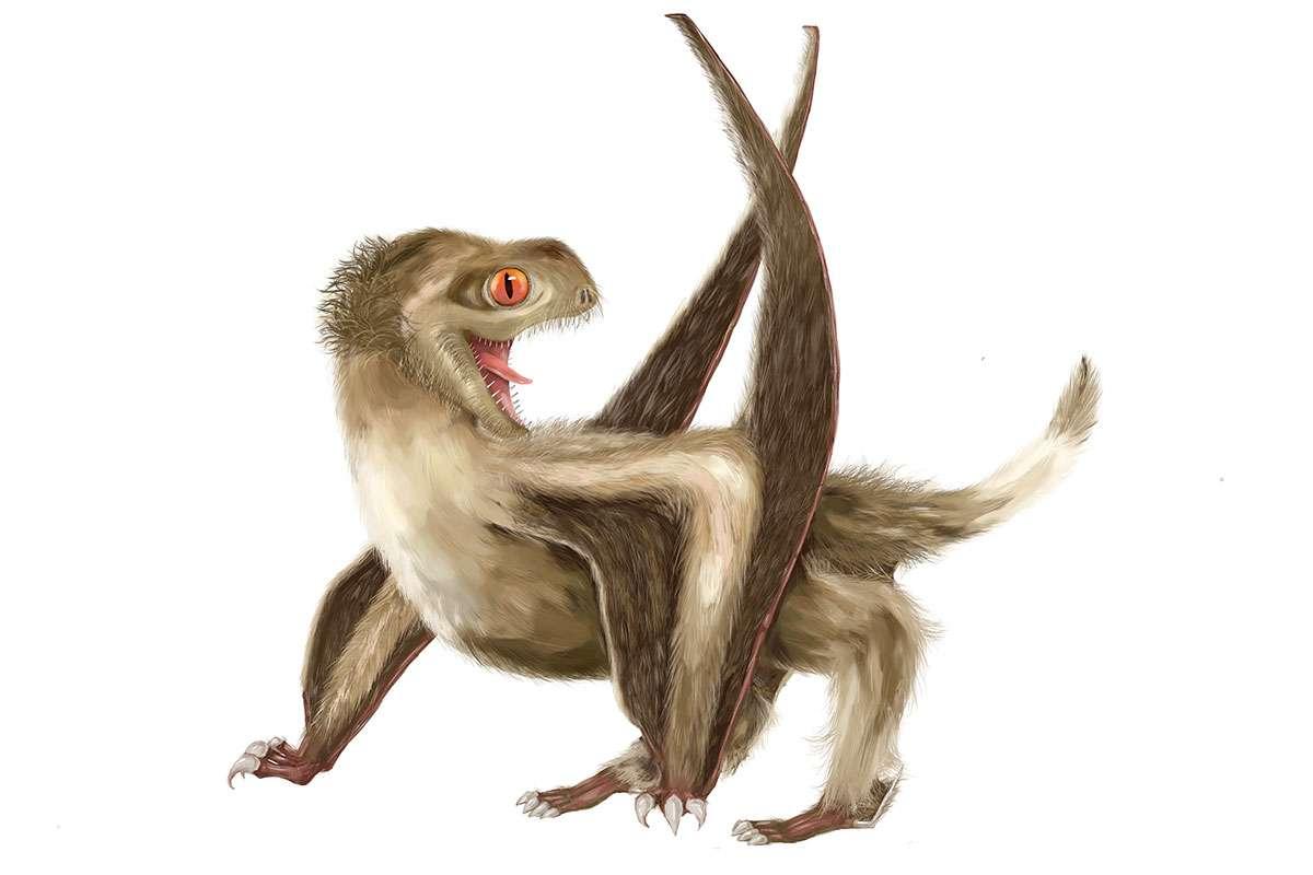 Fósiles muestran que los pterosaurios podrían haber tenido plumas primitivas como algunos dinosaurios