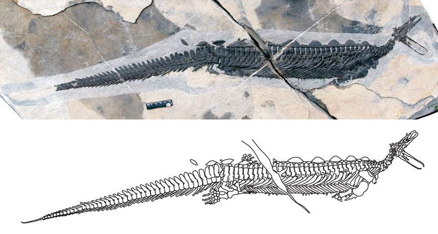 Encontrado extraño «ornitorrinco» prehistórico con una cabeza muy pequeña