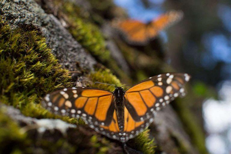 La extinción global de los insectos podría ser peor de lo que pensábamos