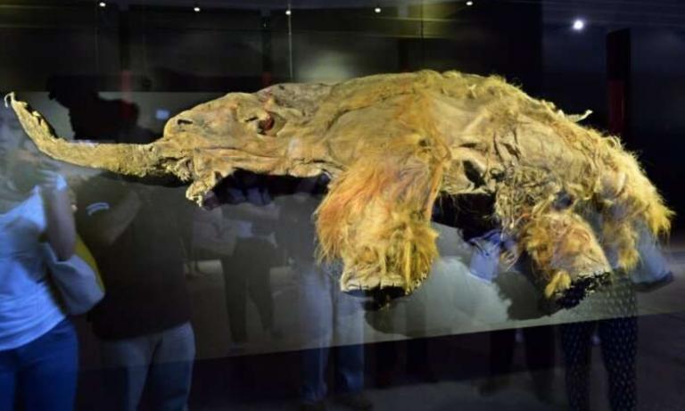 Científicos han «revivido» partes celulares de un mamut lanudo extinto de 28 000 años