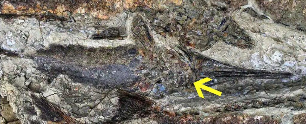 Fósiles encontrados recientemente mostrarían la catástrofe mundial del día en que murieron los dinosaurios