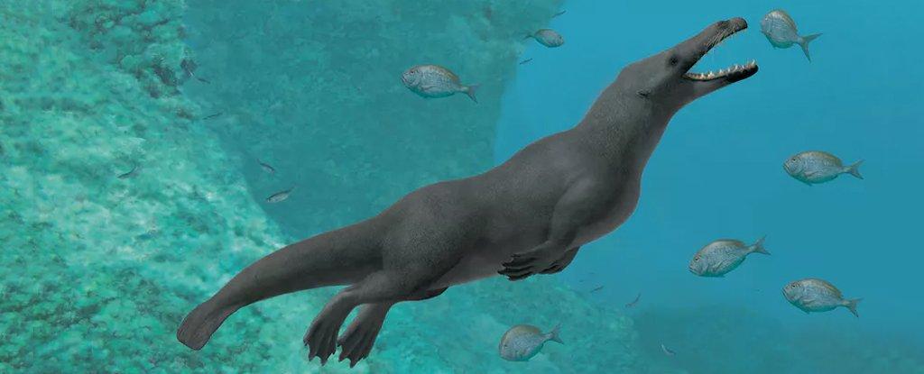 Fósiles encontrados en Perú muestran ancestros de las ballenas que tenían cuatro patas