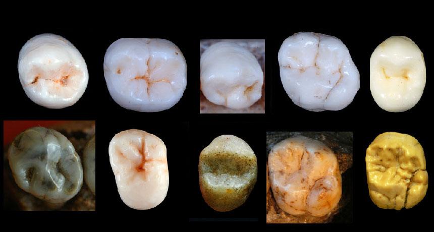 Dientes fósiles sugieren que la separación entre neandertales y homo sapiens se dio hace aproximadamente 1 millón de años