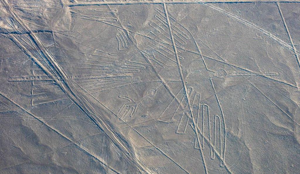 Científicos identifican aves exóticas representadas en las misteriosas líneas de Nazca