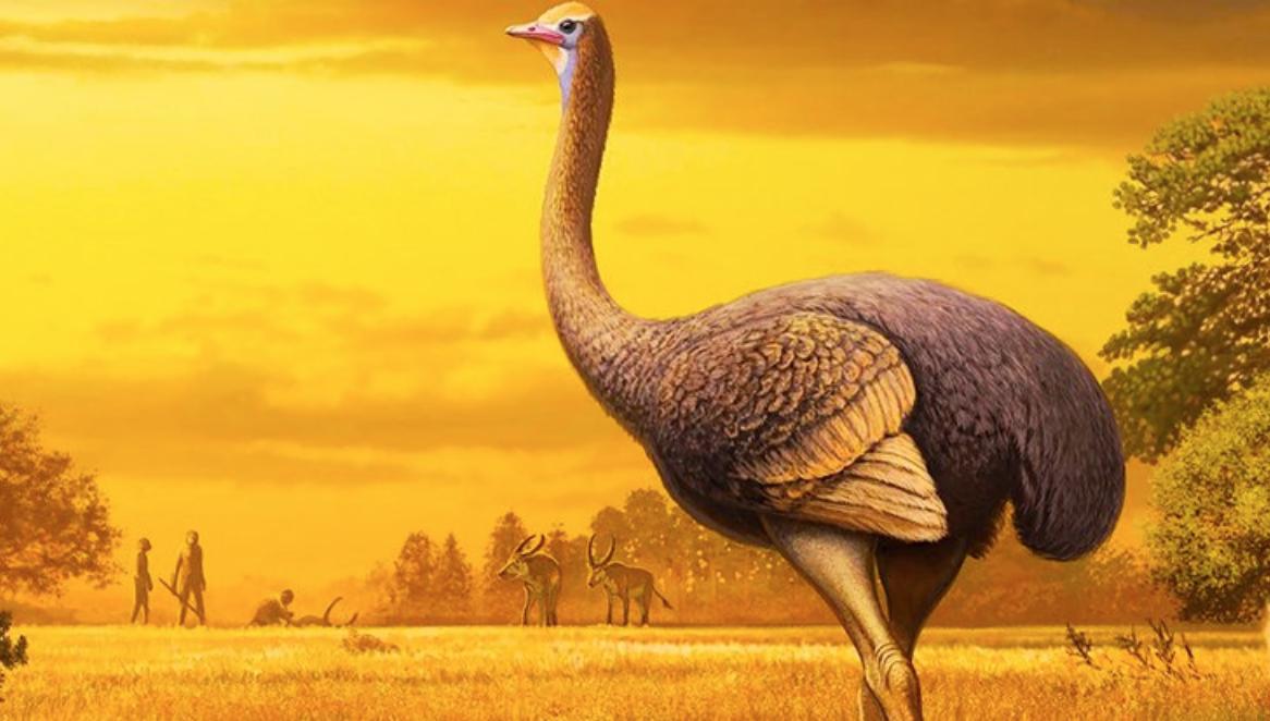 Encontrado en Europa fósil de ave antigua que era tres veces más grande que un avestruz