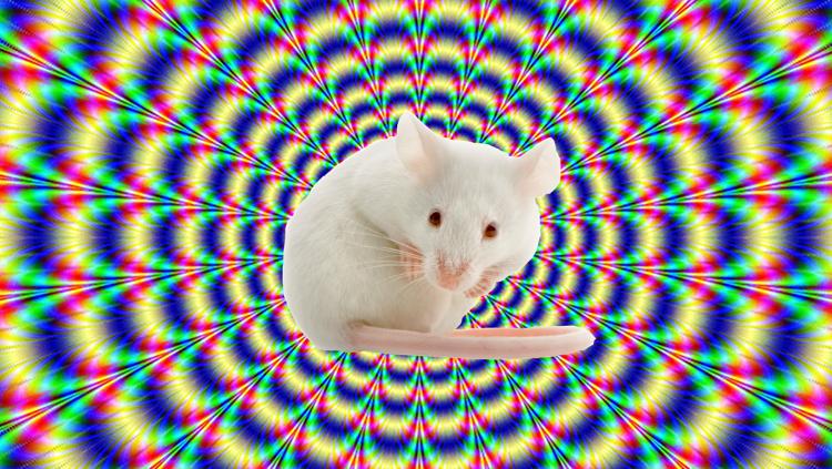 Científicos han provocado alucinaciones en ratones iluminando sus cerebros