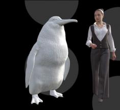Un pingüino tamaño humano vivió en Nueva Zelanda hace 50 millones de años