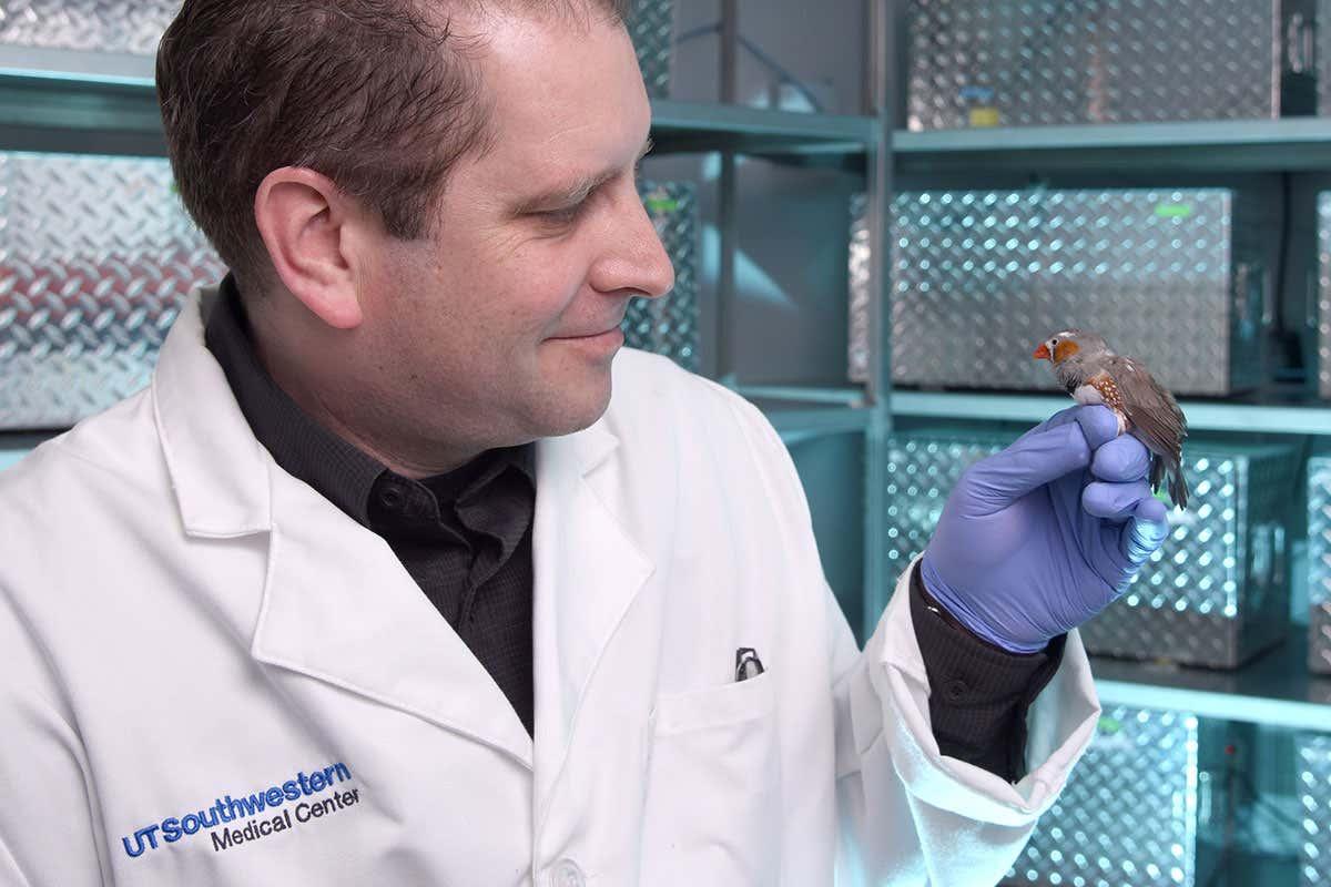 Científicos implantan recuerdos falsos en el cerebro de un pájaro y logran cambiar su tono
