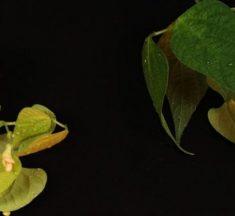 Un nuevo antibiótico ha sido descubierto en el suelo de una selva tropical mexicana