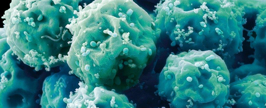 Científicos 'resetearon' la edad de las células madre de una supercentenaria de 114 años