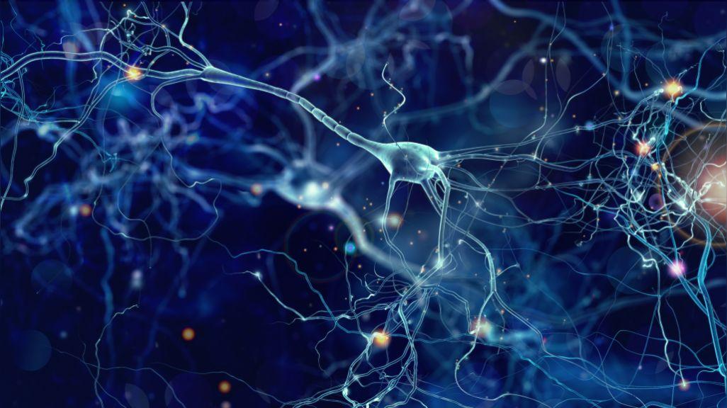 Por primera vez, científicos graban células en el cerebro limpiando neuronas muertas