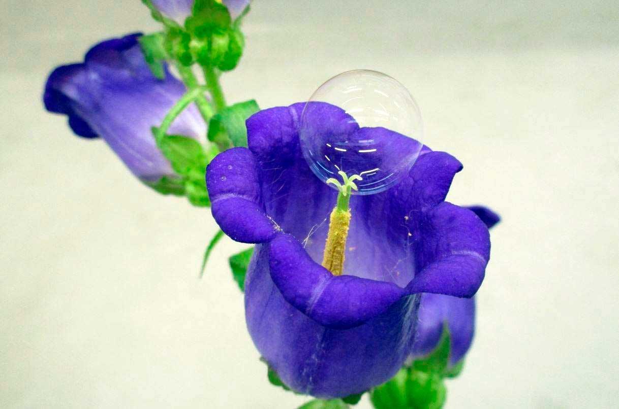 Experimentan con burbujas de jabón para polinizar las flores