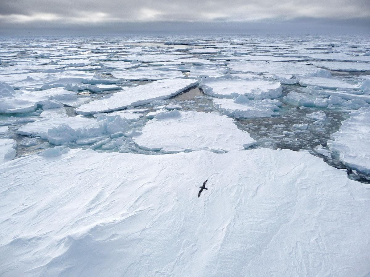 Científicos descubren que el Polo Sur se está calentando 3 veces más rápido que el resto del planeta