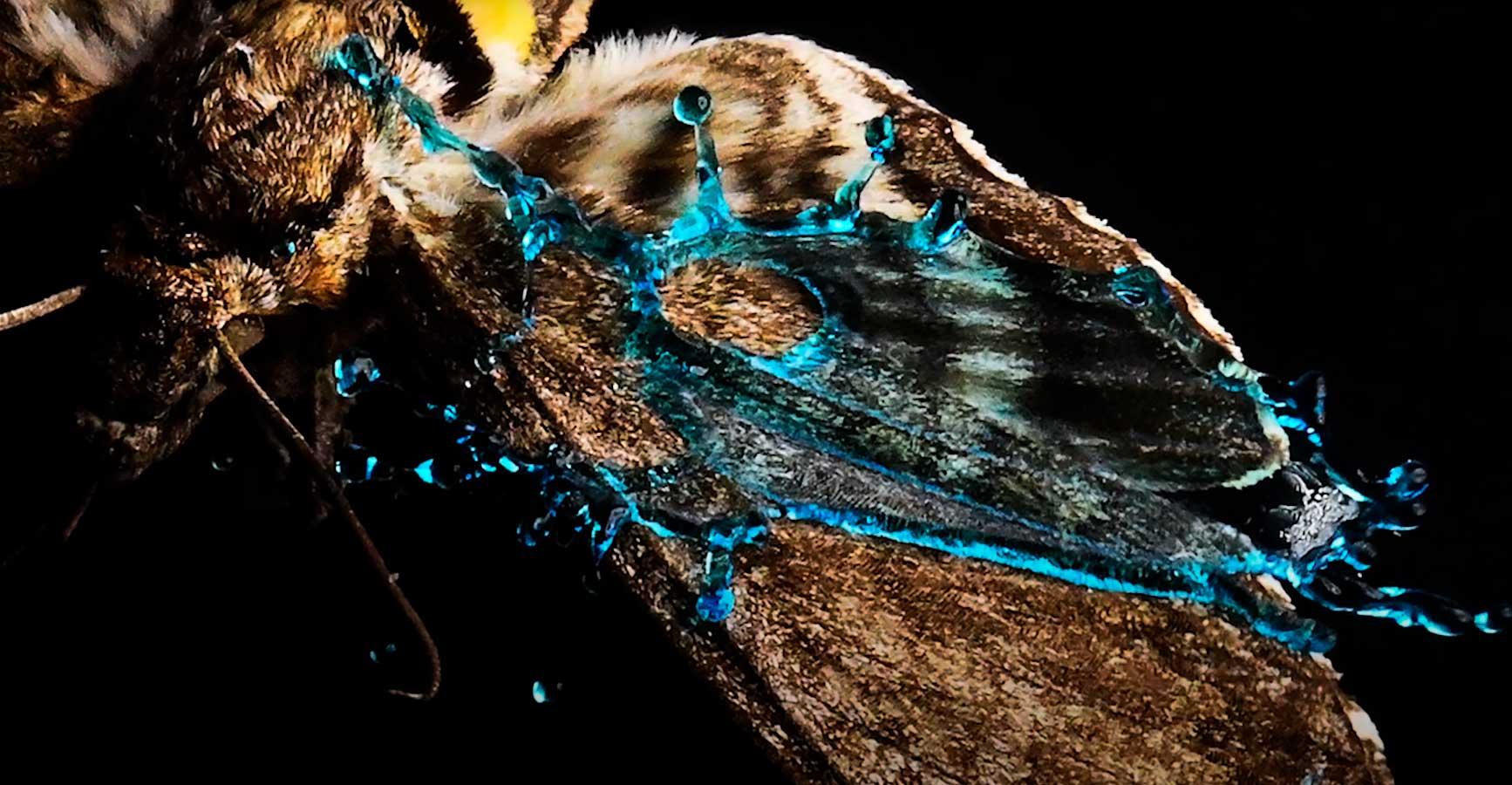 Las mariposas utilizan las micropuntas de sus alas para destruir gotas de lluvia