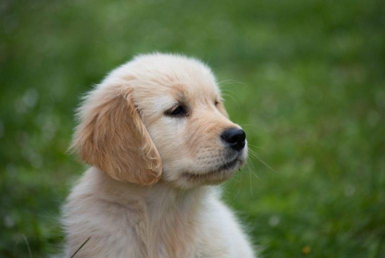 ADN confirma que un año de un perro no equivale a siete años humanos