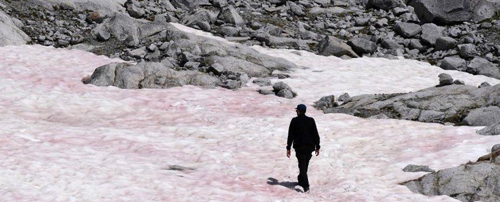 La aparición del hielo rosado en los Alpes podría ser indicador de algo malo