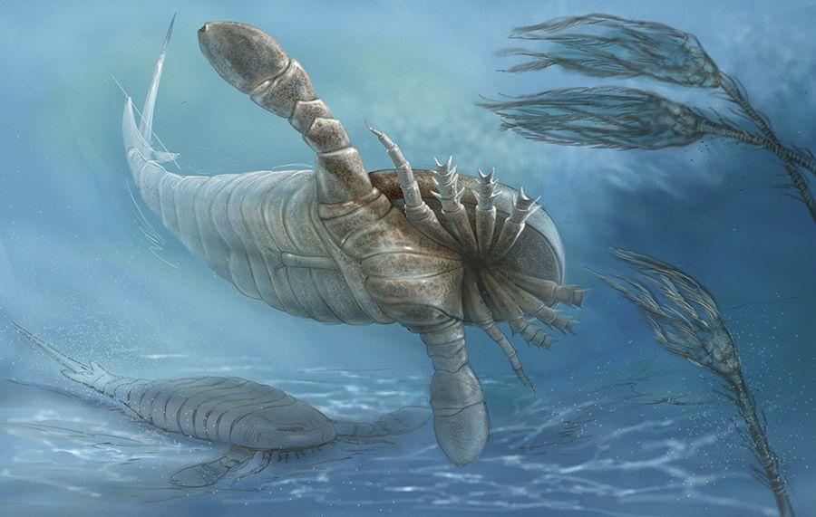 Nuevas investigaciones de los «escorpiones marinos» confirman su gran tamaño