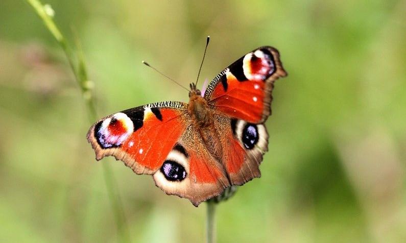 ¿Cuáles son las diferencias entre mariposas y polillas?