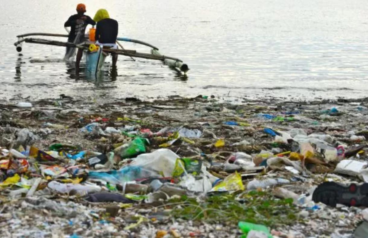 Más de la mitad de las sardinas del Mediterráneo contienen microplásticos