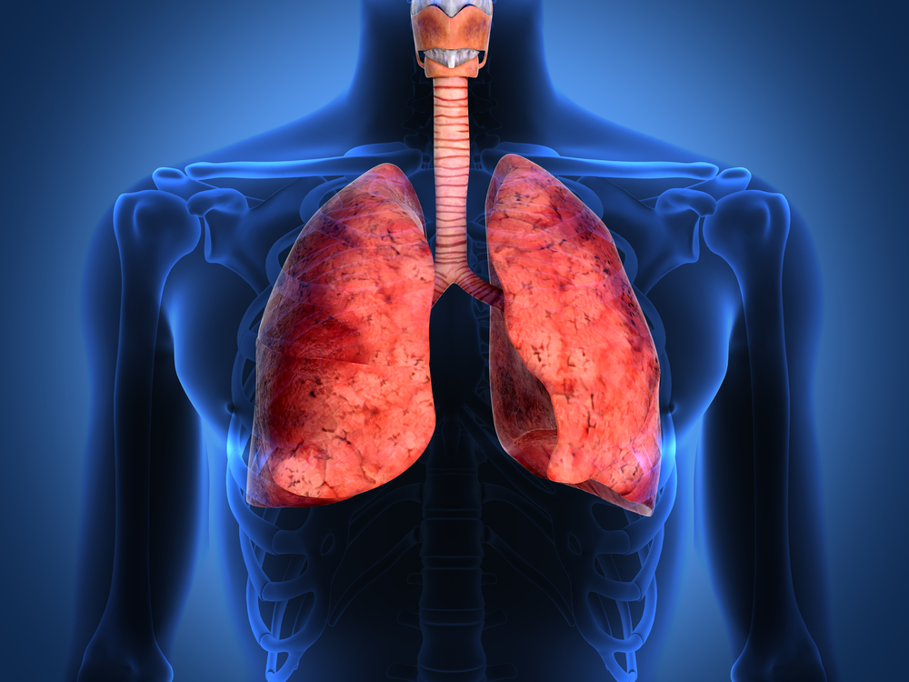 Pulmones humanos dañados pueden repararse al ser conectados al sistema circulatorio de cerdos