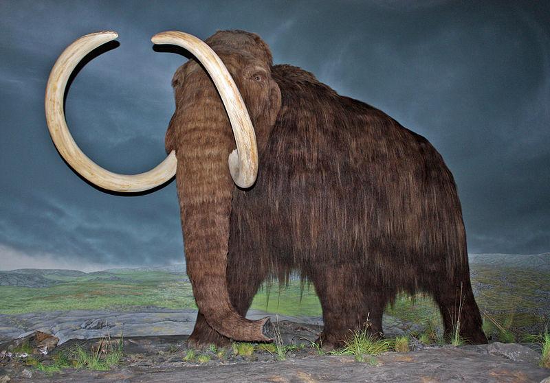 Científicos rusos encuentran un mamut que aun conservaba lana, ligamentos y hasta excremento