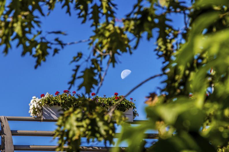 ¿Por qué a veces vemos la Luna durante el día?