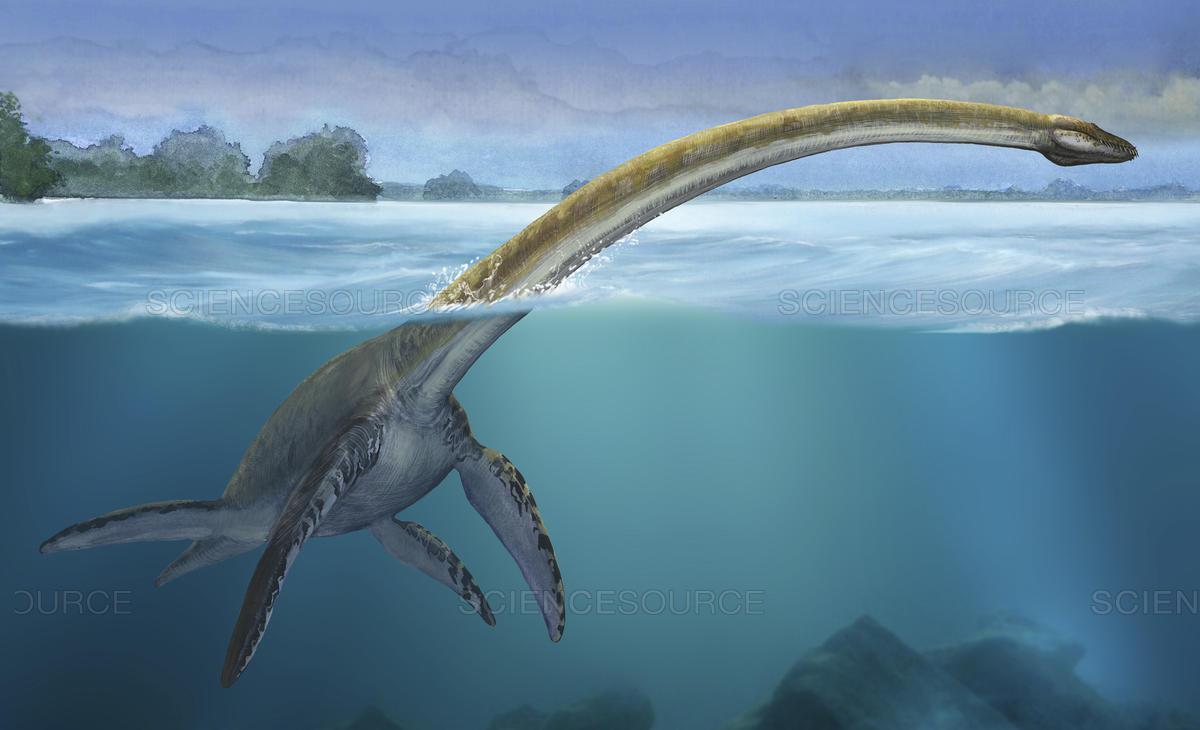 ¿Cómo pasaron los animales de ser acuáticos a ser terrestres?