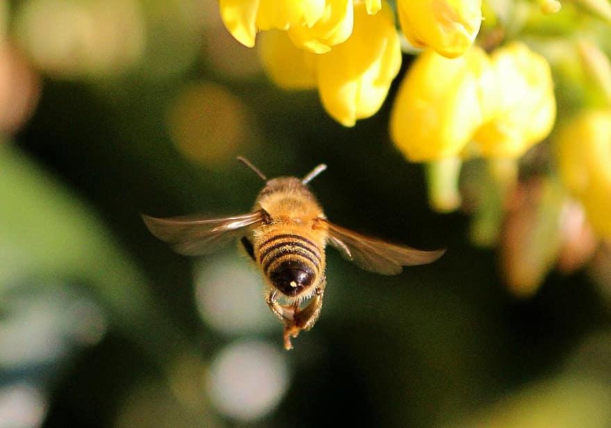 Una molécula del veneno de abeja podría ayudar en nuestra lucha contra el cáncer