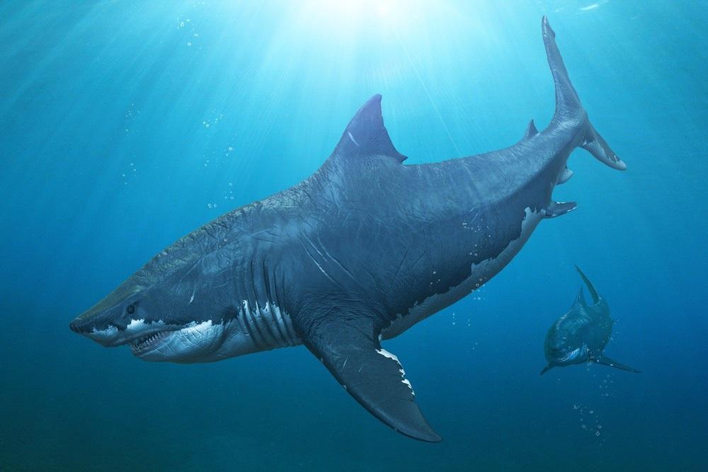 Los megalodones eran gigantes incluso para los tiburones prehistóricos