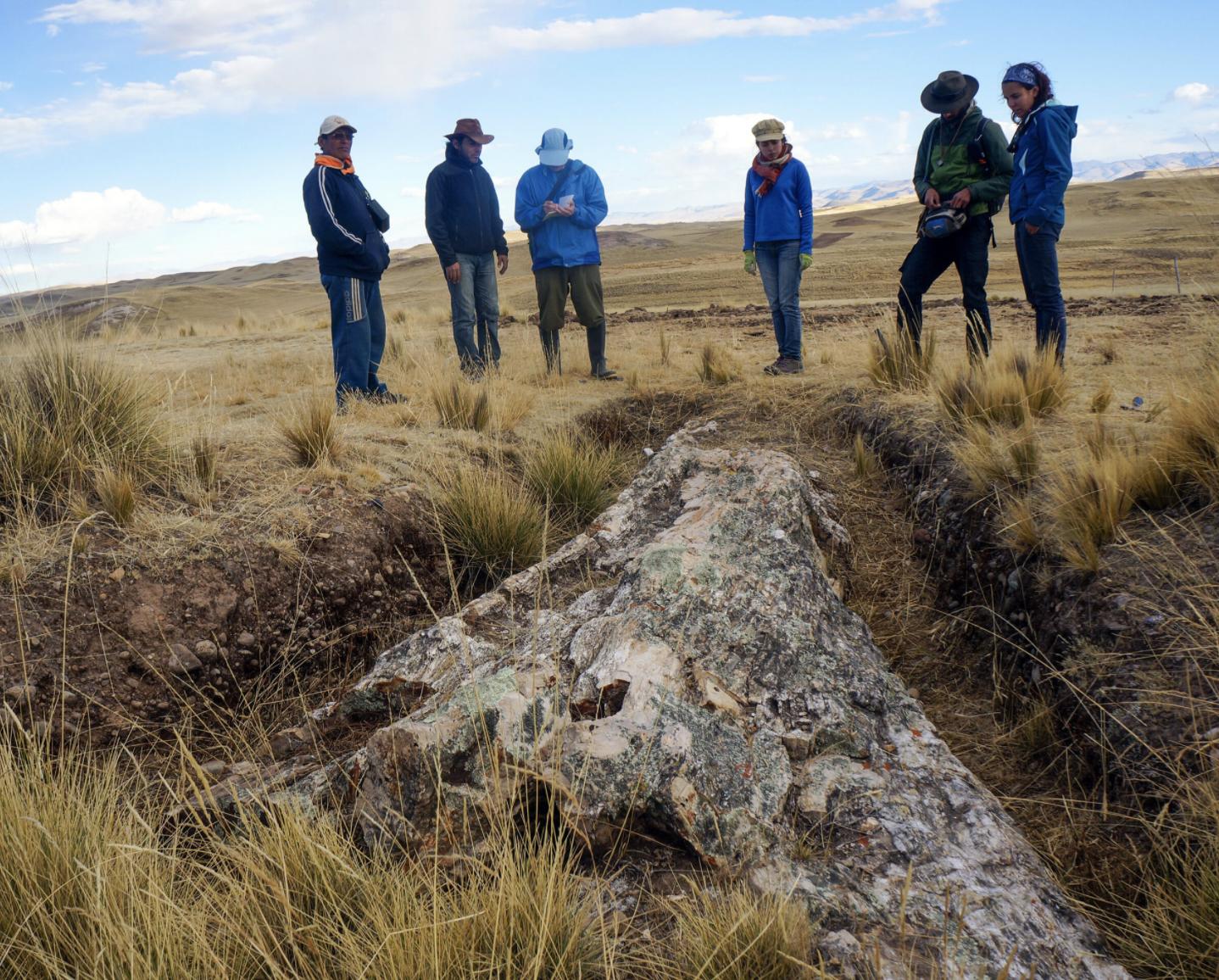 Perú: un fósil de árbol gigante de 10 millones de años cuenta una dramática historia sobre el cambio climático