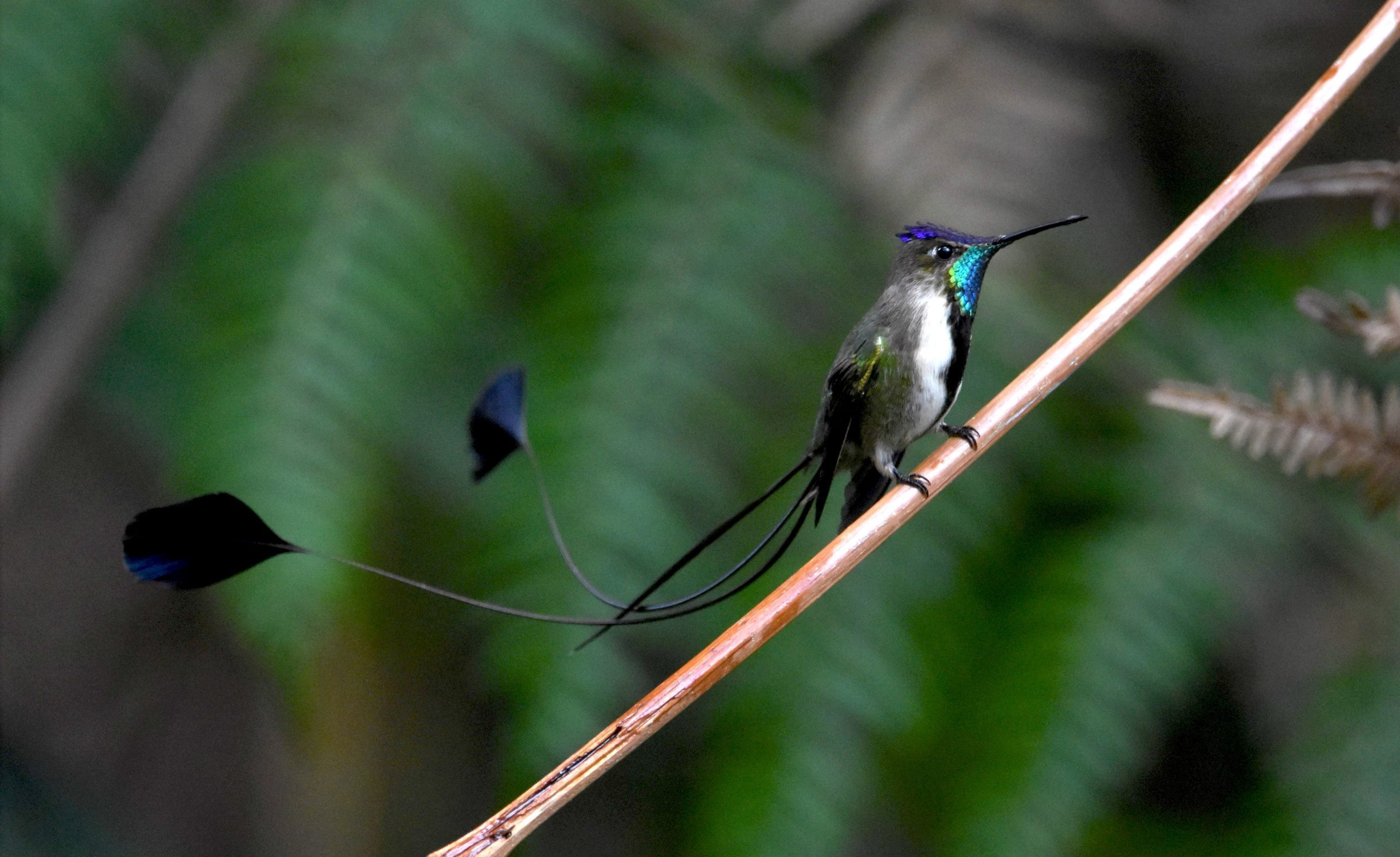 5 increíbles datos sobre los colibríes