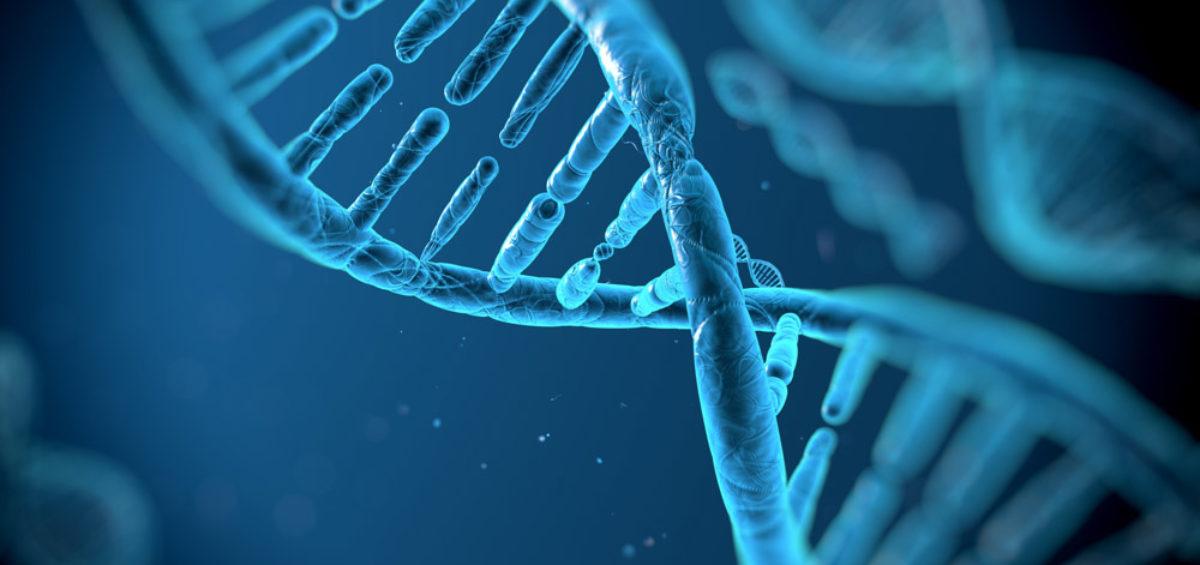 ¿De qué está hecho el ADN?