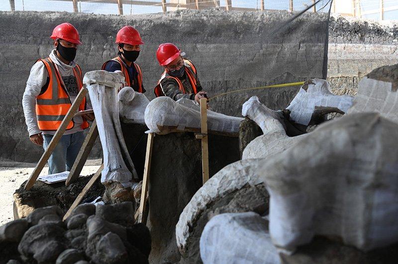 Descubiertos cientos de huesos de mamut bajo el aeropuerto de Ciudad de México