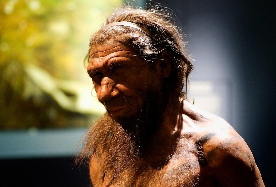 Estudio genético revela como los cromosomas Y humanos reemplazaron a los de los neandertales