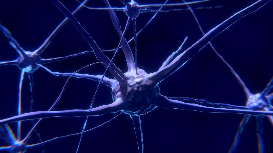 El nuevo coronavirus puede infectar las neuronas, señala estudio